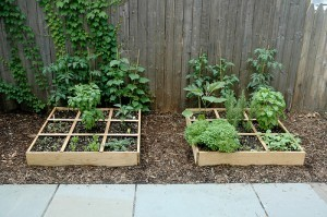simple-square-foot-gardens-300x199