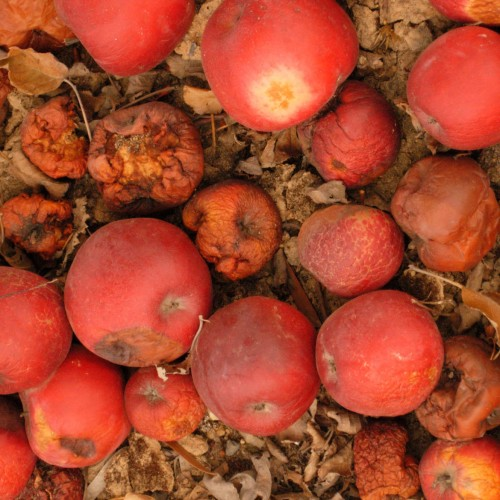 Waarom je misschien beter lelijke appels kunt kopen