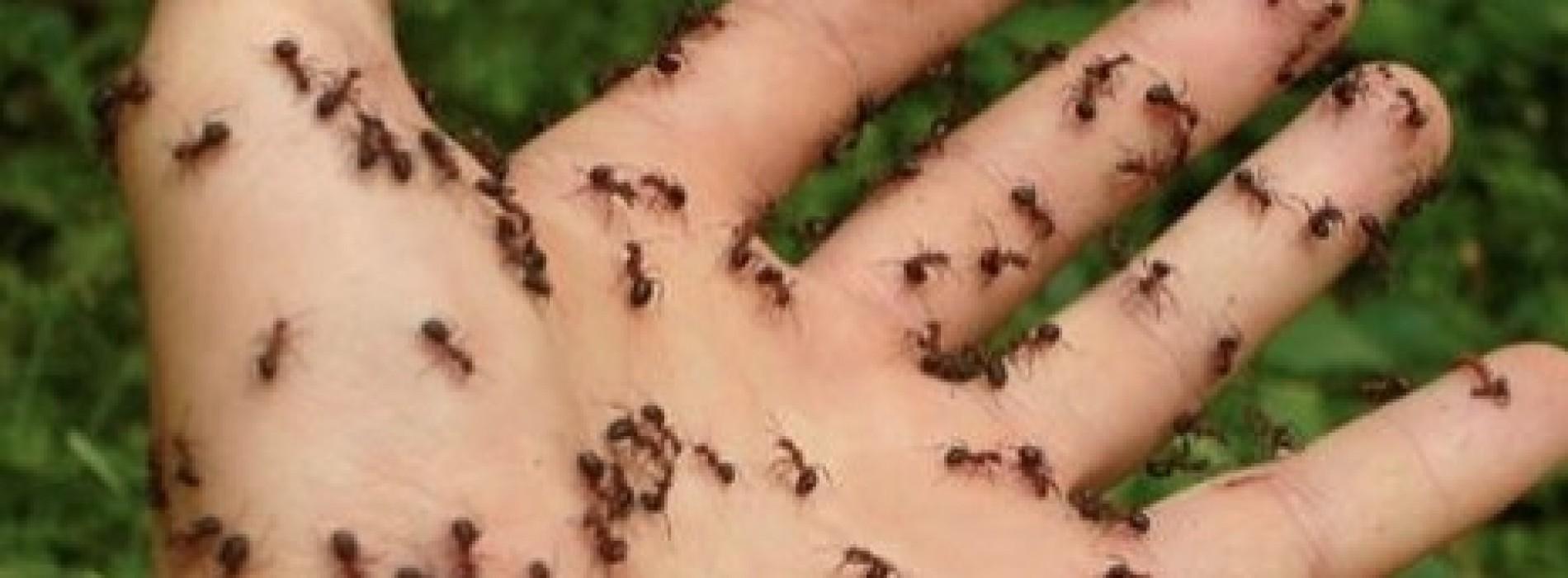 Reken af met die mieren door dit zelfgemaakte mengsel in je huis te spuiten!