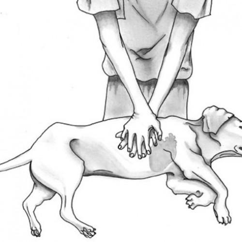 Reanimatie voor huisdieren, dit MOET je kennen