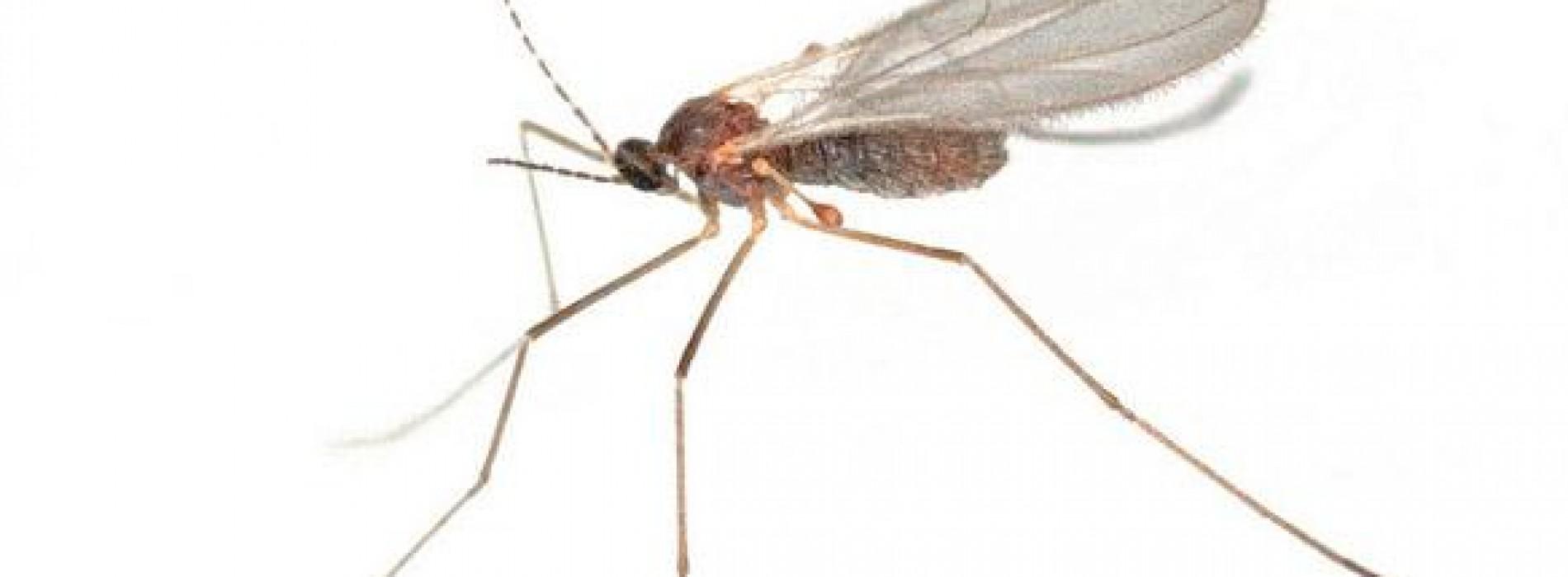 Er is een heel simpel middel om sneller van je muggenbult af te komen
