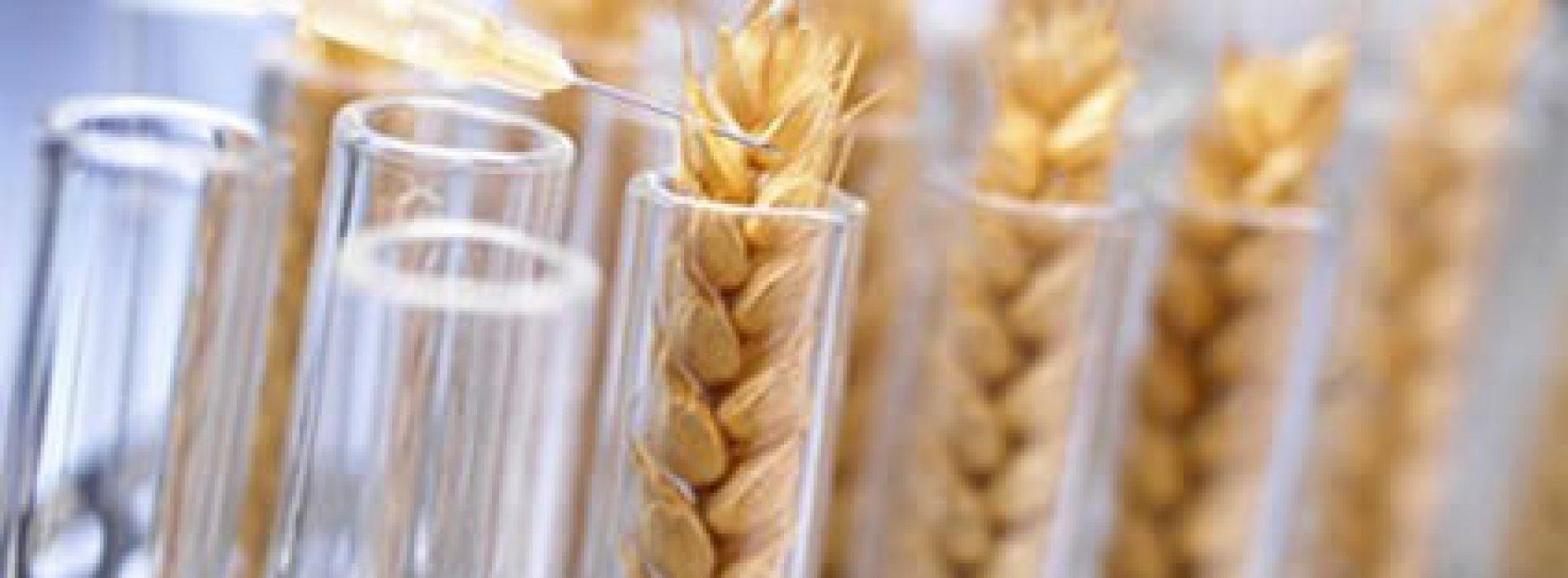 Cardioloog: modern graan bevat verslavend opiaat