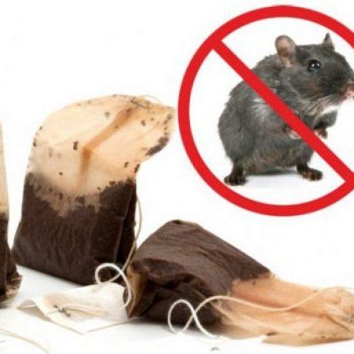 Hoe een theezakje kan helpen tegen muizen en spinnen? Deze tip is geniaal!