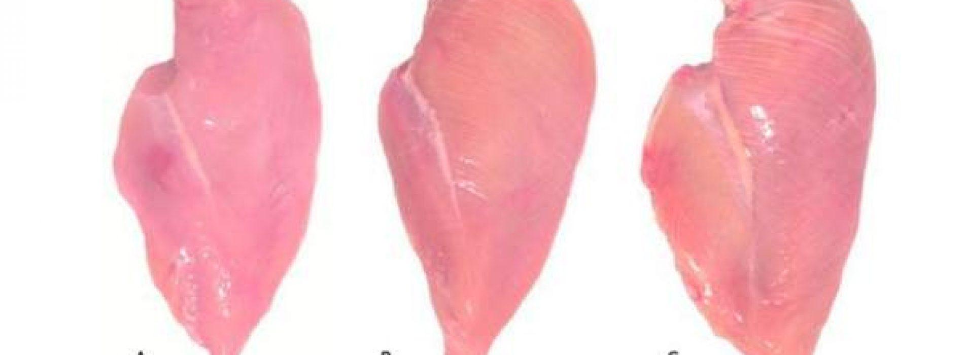 Dit is waarom je altijd een kippenborst moet inspecteren voordat je het koopt. Dit moet iedereen weten!