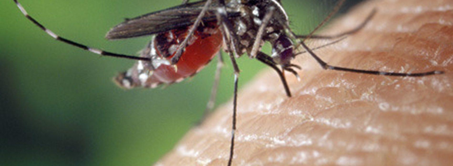 Als jij altijd het doelwit bent van muggen dan moet je dit echt even weten.