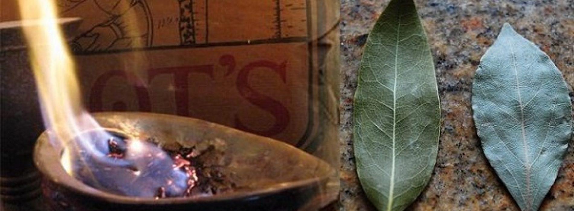 Verbrand laurierblaadjes in je huis en geniet van drie heilzame gezondheidseffecten!