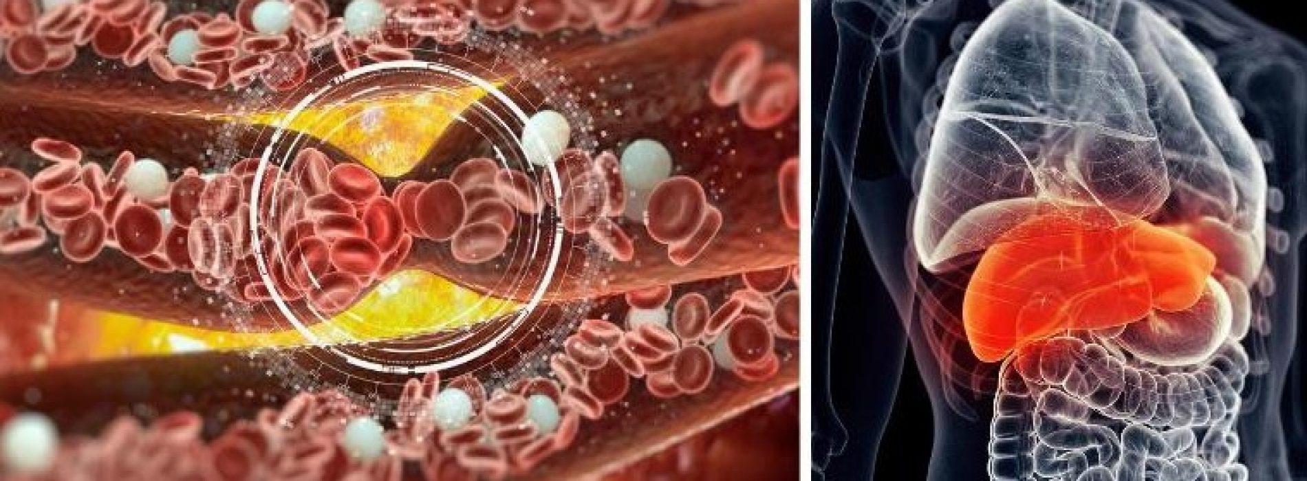 Tekort aan magnesium verhoogt kans op chronische ziekten en vroegtijdig overlijden