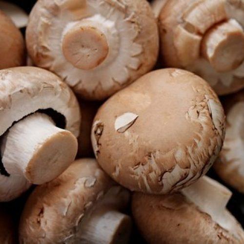 Slechts 5 champignons per dag houden hersenen en lijf oergezond