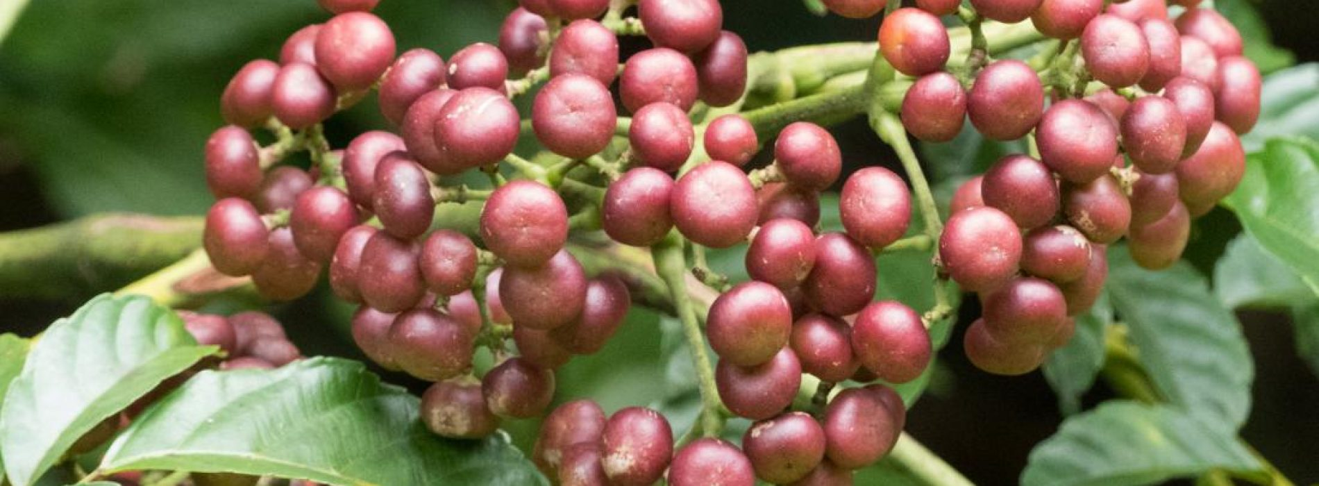 Deze 5 tropische planten kunnen 'antikanker voordelen' bieden