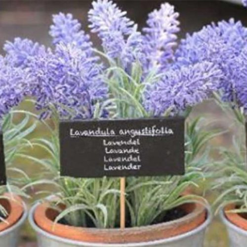 5 planten voor uw slaapkamer om u te helpen beter te slapen