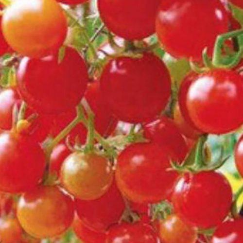 Hoe krijg je 3 keer meer tomaten door simpelweg je vingers te gebruiken!