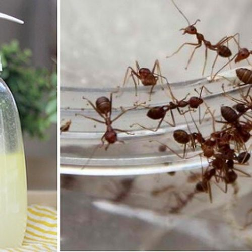 Spray dit eenvoudige mengsel en je zult nooit meer mieren in je huis zien!