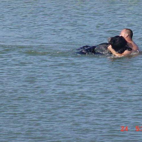 Dappere man die 400-pond zwarte beer van verdrinking redt is mogelijk een van de beste reddingsverhalen ooit