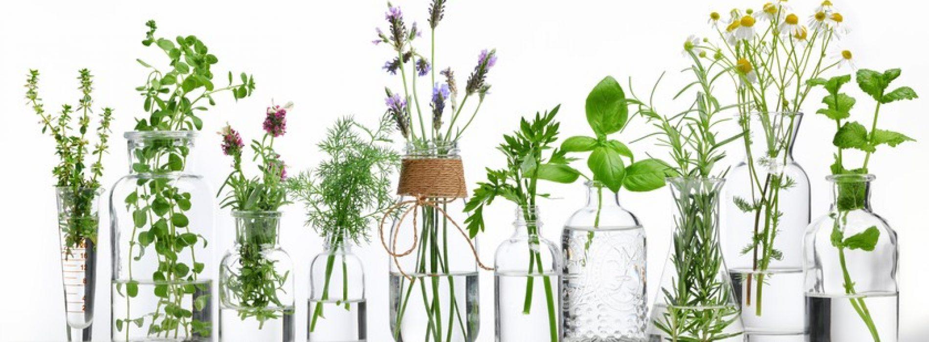Essentiële oliën voor een goede gezondheid: hoe ze te gebruiken en wanneer ze te vermijden