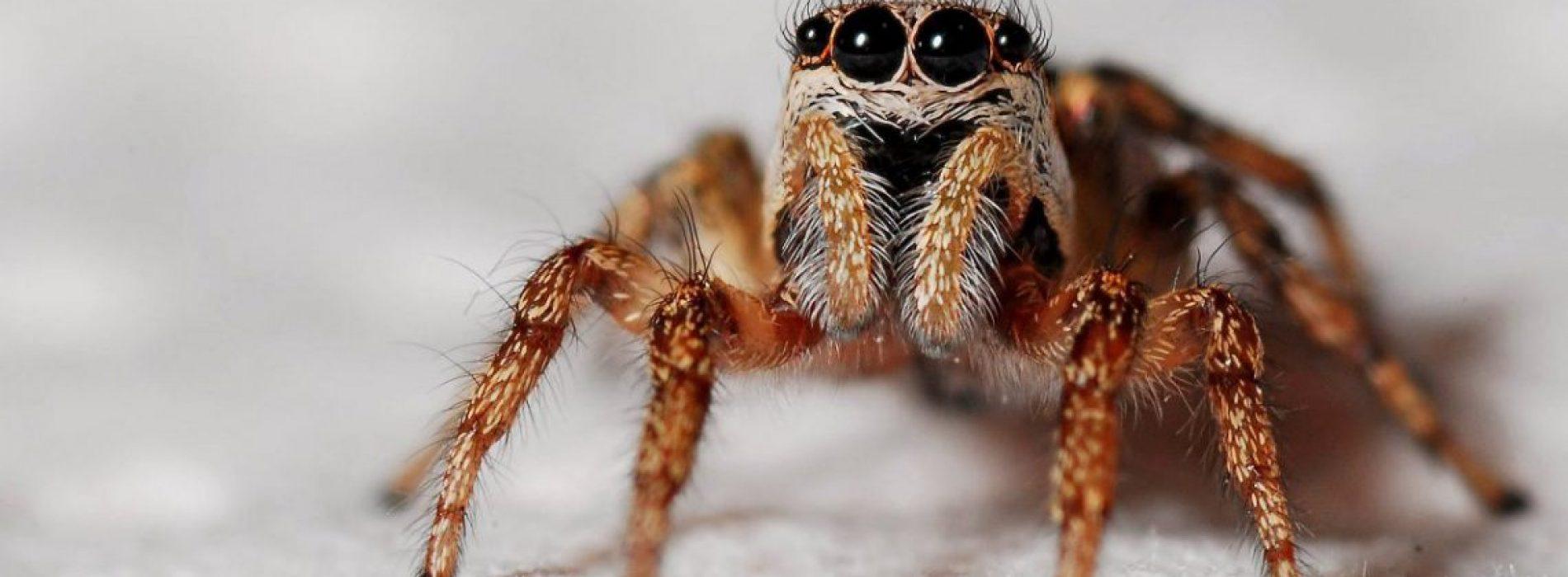 Waarom je de spinnen in je huis niet zou moeten doden volgens een entomoloog
