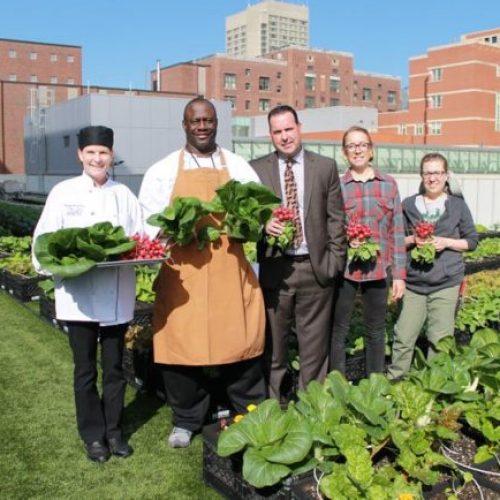 Goed bezig! Deze daktuin van het ziekenhuis levert jaarlijks 7000 pond organische groenten voor patiënten