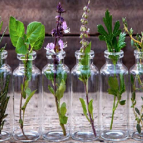 10 kruiden die het hele jaar door in water kunnen worden gekweekt