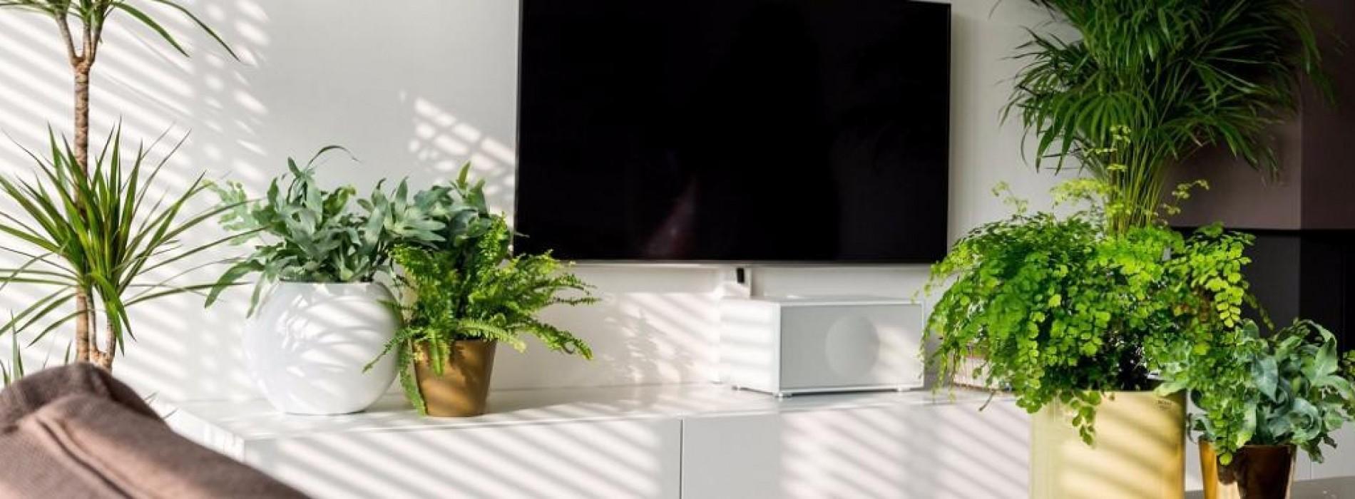 NASA: Deze kamerplanten zuiveren de lucht in je huis maximaal