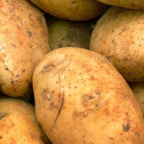 Zo kweek je 100kg aardappelen op je balkon