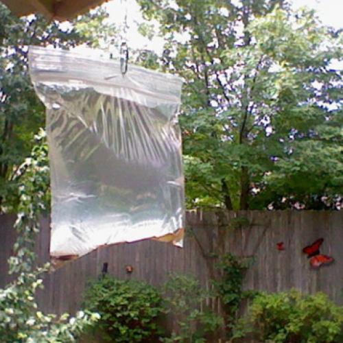 Ze doet centjes in een zak met water en laat het de HELE zomer in haar tuin hangen. De reden? Goed om te weten!