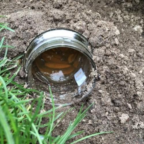 Ze legt een potje met een soort vloeistof in de tuin en jaagt daar alle slakken mee weg!