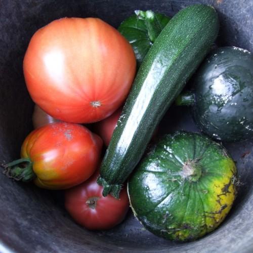 Watervruchten, overvloed en spotgoedkoop