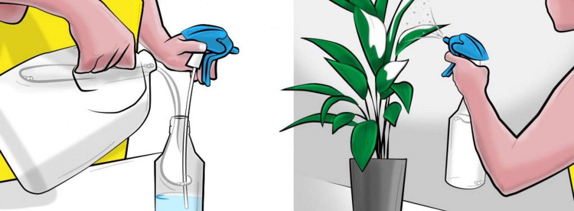 Hij spoot elke week melk op zijn planten. De reden? DIT geweldige effect!