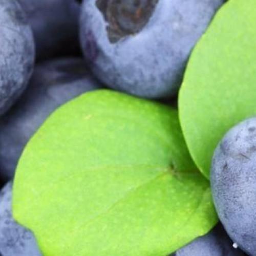 Onderzoek: Fruit en groente maakt gelukkig en daarna gezond