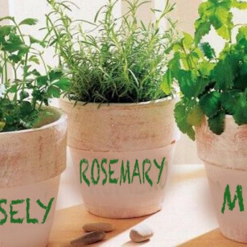 Hoe kweek je thuis rozemarijn, peterselie en munt?