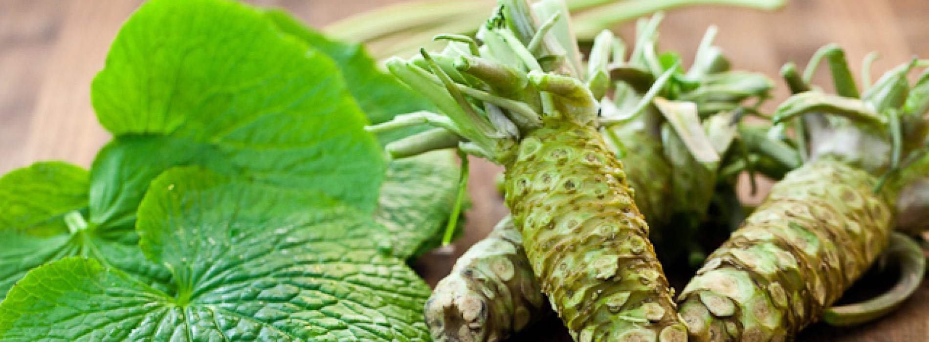 'Natuurlijke chemotherapie': Wasabi doodt kankercellen