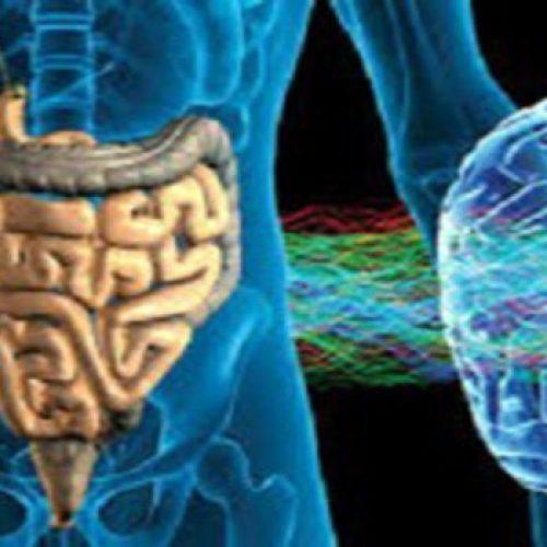 Hersengezondheid wordt bepaald door de darmen