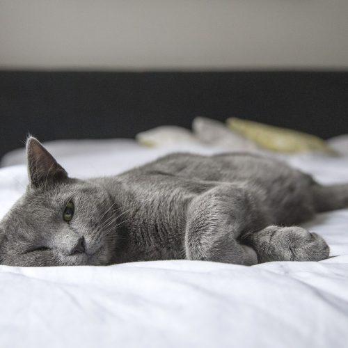Een goede nachtrust hangt voor een groot deel af van je matras
