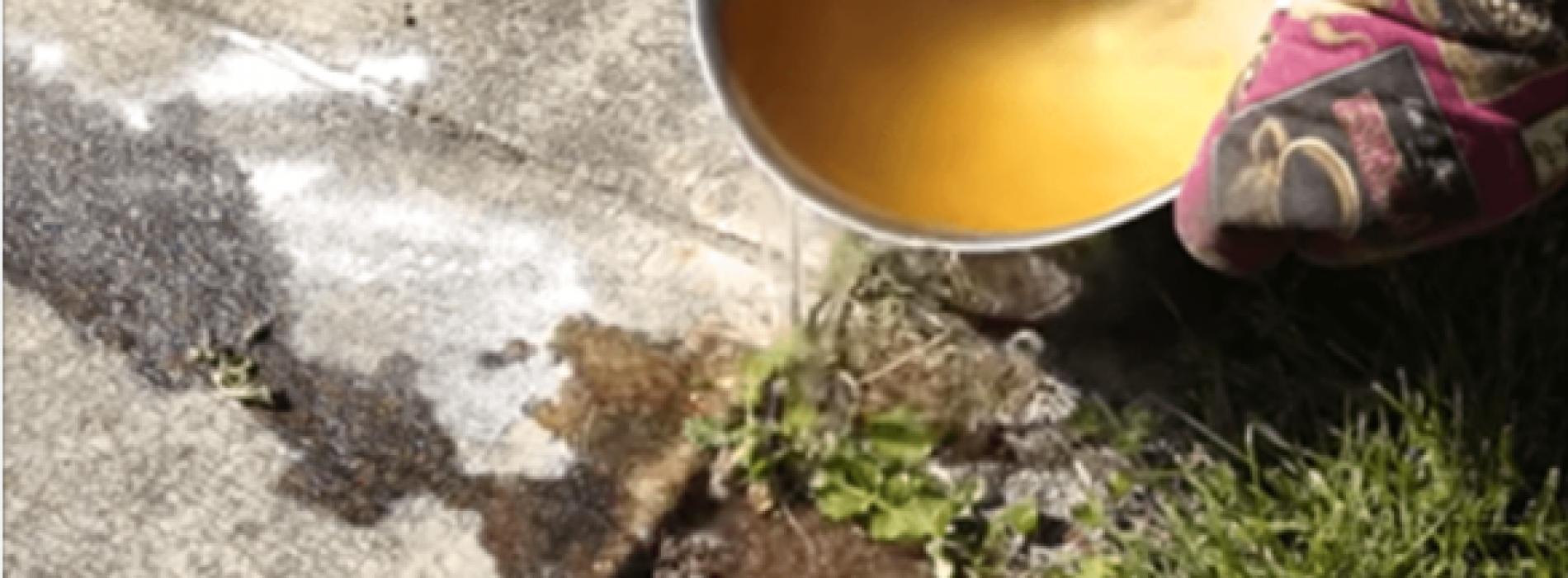 7 manieren om van mieren af te komen. Deze heb je waarschijnlijk nog niet geprobeerd