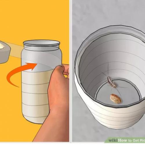 Heb jij thuis ook zo'n last van zilvervisjes? Met deze trucjes heb je daar nooit meer last van!