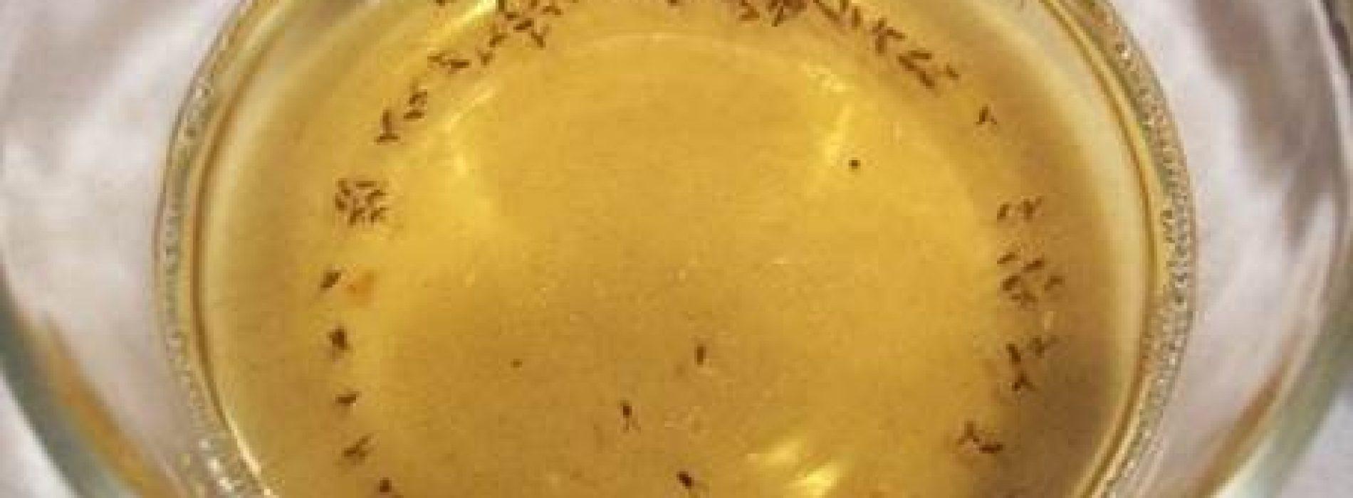 Last van fruitvliegjes? Deze 3 tips zullen ze laten verdwijnen in een mum van tijd!