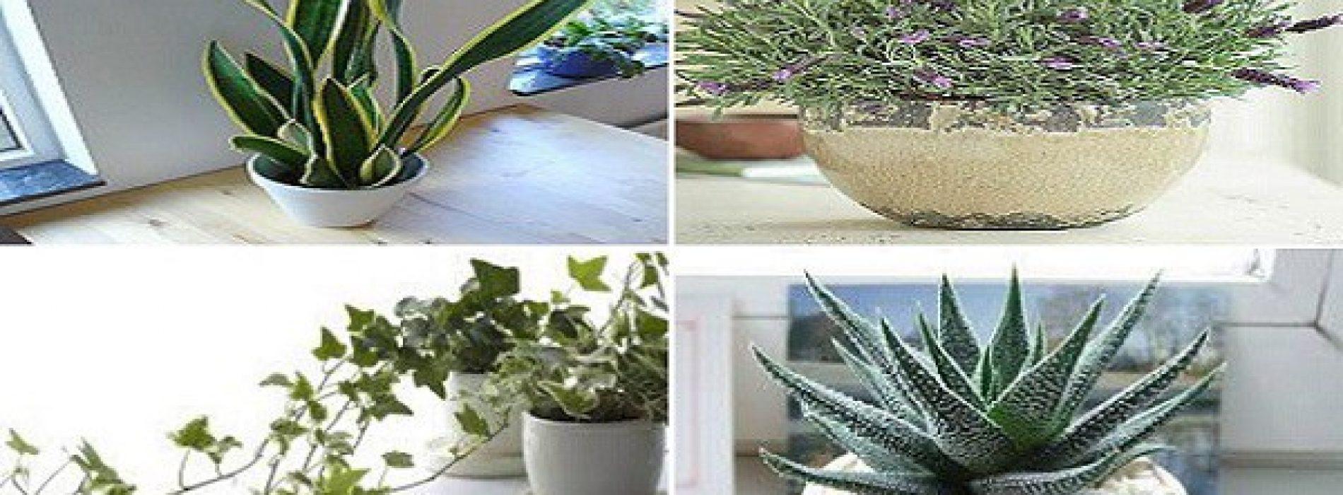 4 planten voor je slaapkamer om slapeloosheid en slaapapneu te behandelen