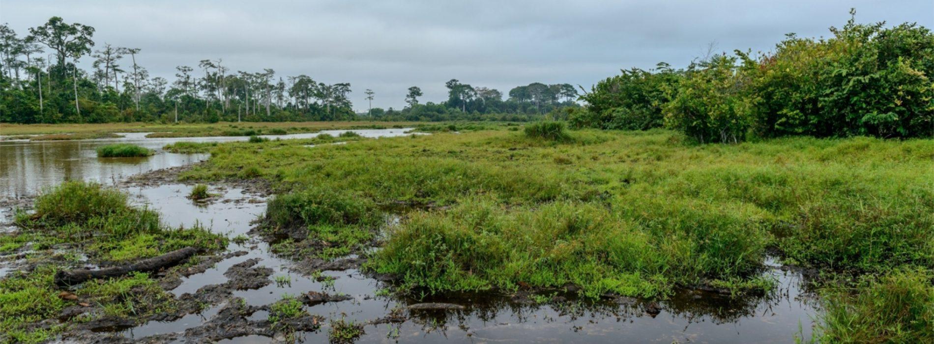 Tropisch Instituut waarschuwt voor superresistente buiktyfusbacteriën in Congo: 'Dit kan desastreus zijn'