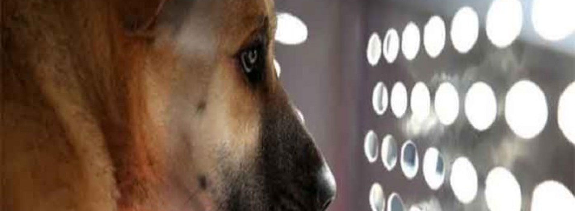 """Dierenarts: """"Iedere dag sterven duizenden huisdieren door vaccins die ze niet nodig hebben"""""""
