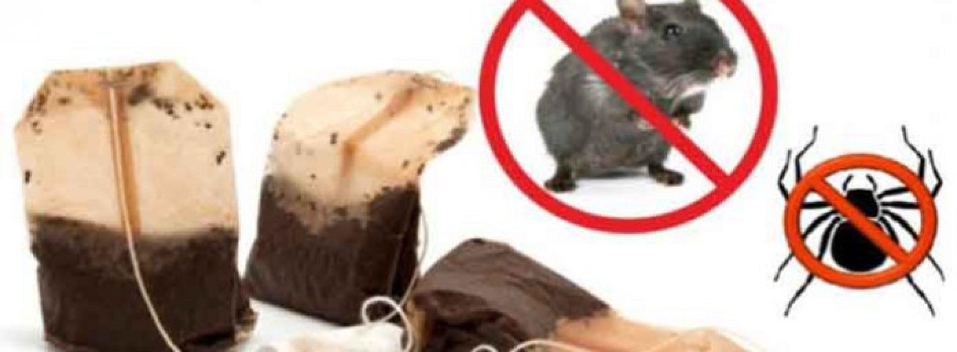 Als je 1 theezakje gebruikt, kom je nooit meer muizen of spinnen in je huis tegen