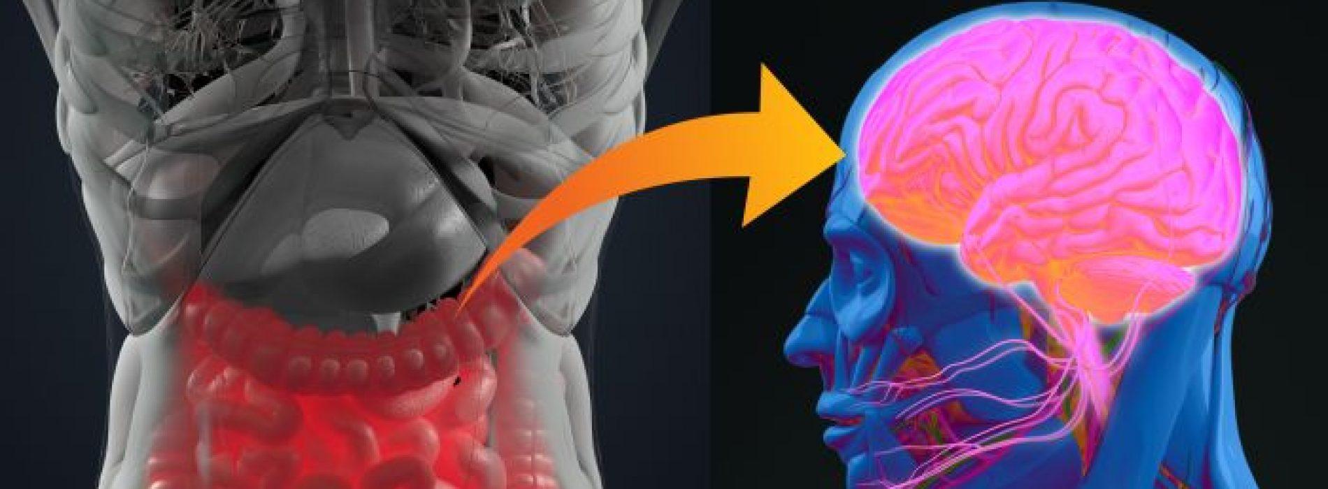 Mogelijk verband tussen darmbacteriën en ADHD