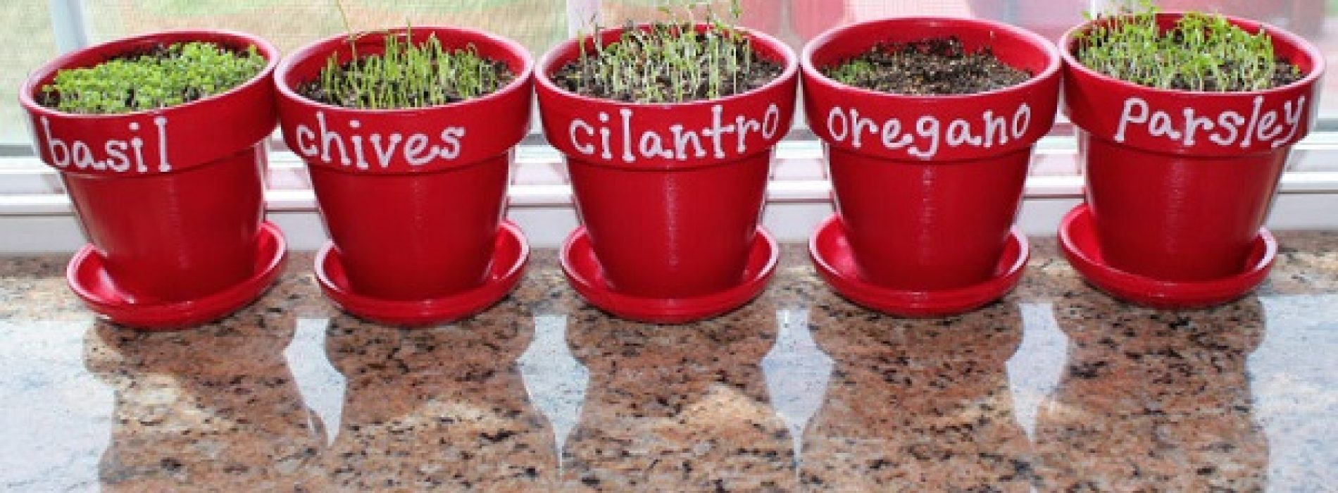 7 genezende kruiden die super eenvoudig binnen groeien (en hoe je ze kunt laten groeien)