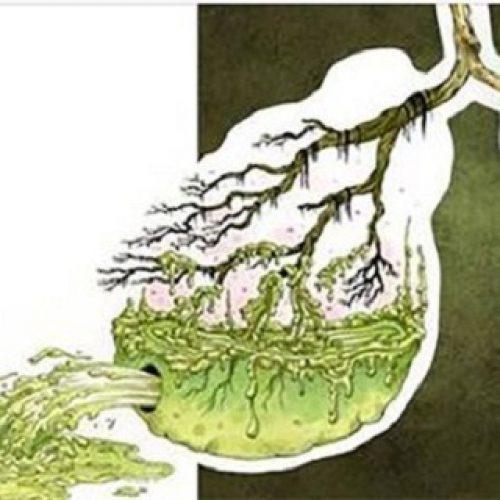 Wilt u slijm uit uw longen verwijderden en een directe boost geven aan uw immuunsysteem? Probeer dit eens!