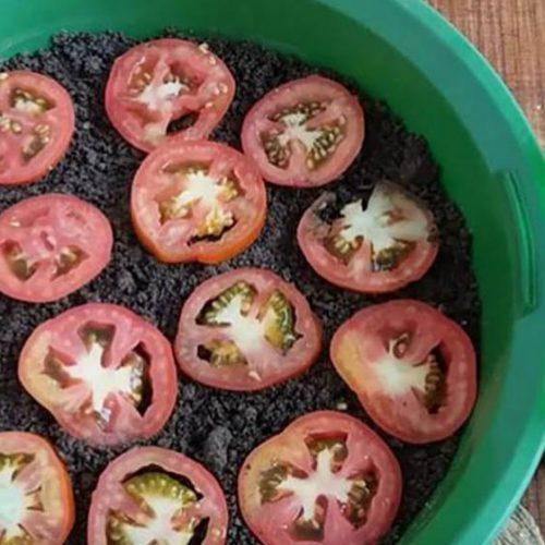 De eenvoudigste manier om tomaten te laten groeien, zodat je ze nooit meer hoeft te kopen
