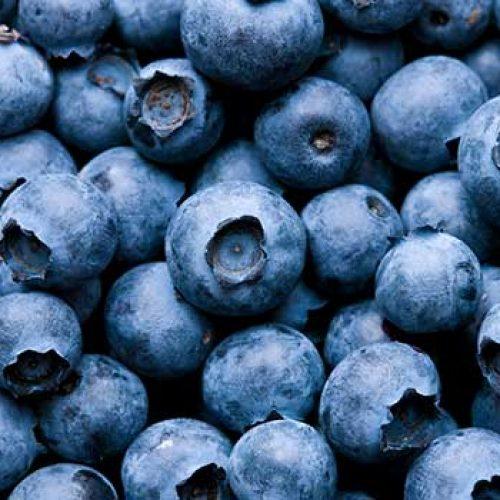 Blauw is goed voor het bloed: onderzoek vindt dat bosbessen eten de bloedvatfunctie verbetert