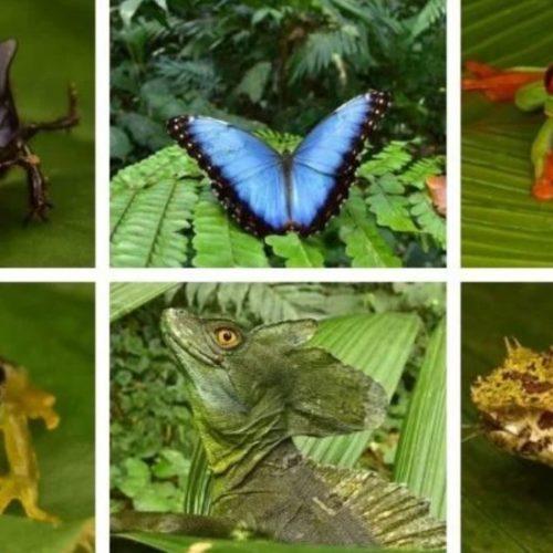 Tientallen 'uitgestorven' wezens gevonden die leven in 'Verloren Stad' diep in het regenwoud gevonden