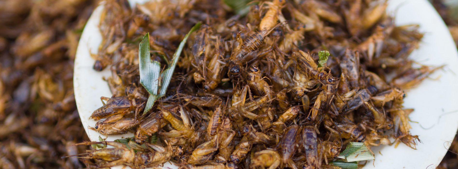 """Wetenschappers beweren dat insecten vol antioxidanten zitten en dat het drinken van """"cricketsap"""" kanker stopt"""