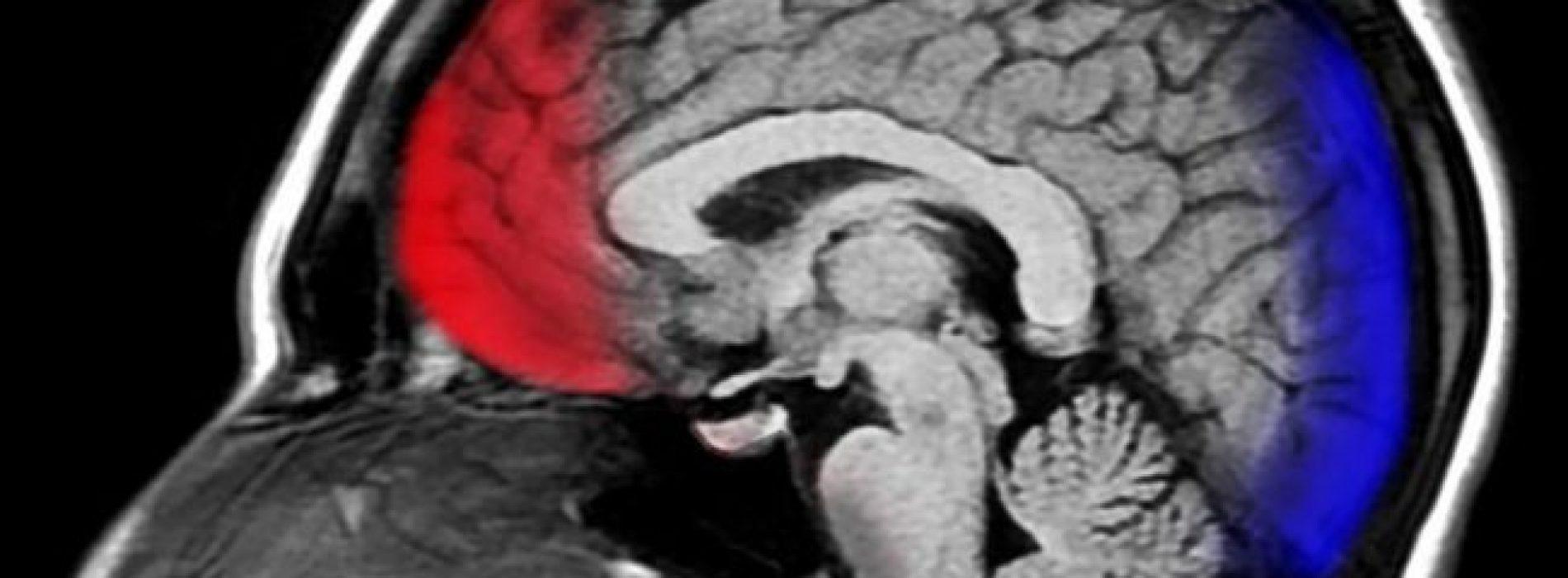 Neurowetenschappen onthullen hoe dankbaarheid je hersenen letterlijk opnieuw afsteld om gelukkiger te zijn