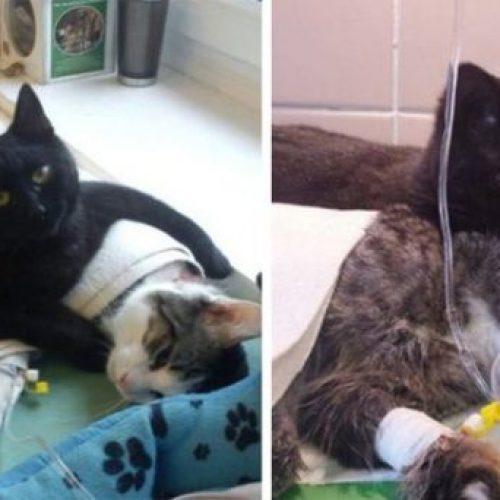 Het hartverwarmende verhaal van een verpleegster kat die zorgt voor zieke en gewonde dieren in een asiel