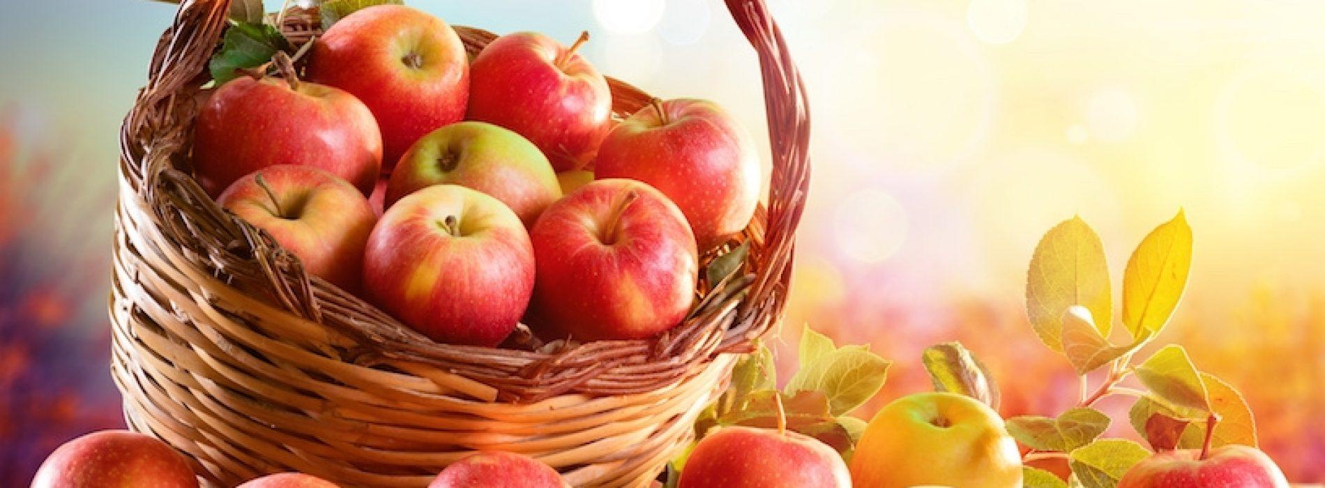 Biologische appels zijn beter dan conventionele appels voor de darmgezondheid, blijkt uit nieuwe studie