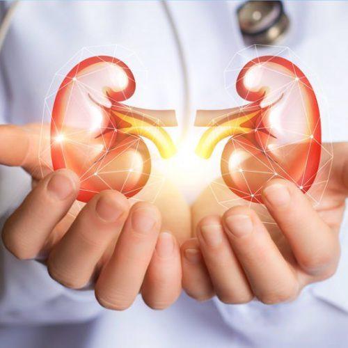 Beste kruiden en voedingsmiddelen om te eten voor een betere nierfunctie